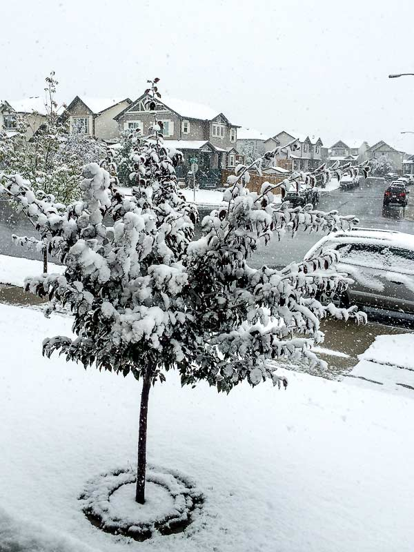 Snow going crazy in Calgary on September 8th, 2014